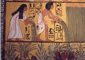 Kom-el-Ahmar-harvest